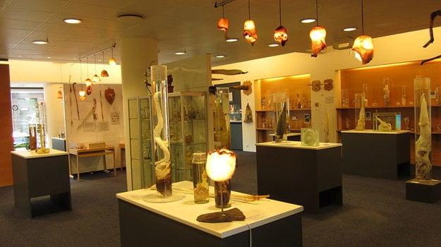 Múzeum penisov na Islande.