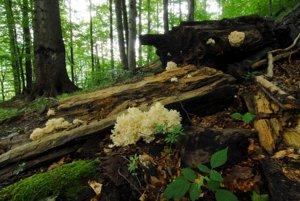 Prales v Národnej prírodnej rezervácii Stužica v Národnom parku Poloniny. Aj on je súčasťou Svetového prírodného dedičstva UNESCO