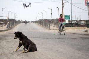 V krajine sú túlavé psy doslova na každom roku.