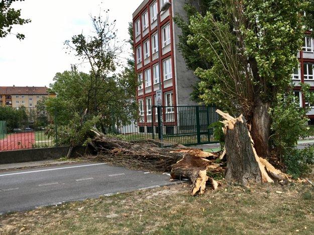 Zvalený strom v Bratislave.