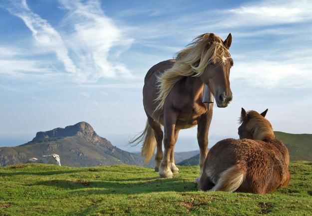 Kone sa vo voľnej prírode dožívajú približne 15-20 rokov. V zajatí sa môžu dočkať aj päťdesiatky.