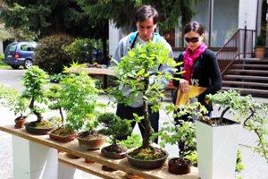 Návštevníci si prezerajú výstavu bonsajov.