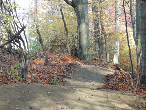 Dráha v lese na Drozdove.
