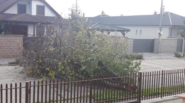 Spadnutý strom na ulici v Trnave.
