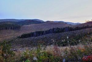 Rúbanisko na Muránskej Planine.