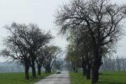 Cesty druhej a tretej triedy. Niektoré ešte lemujú aleje starých stromov.
