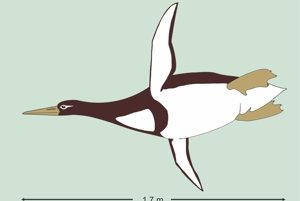 Ilustrácia obrovského tučniaka Kumimanu biceae.