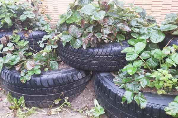 Niektoré pneumatiky sa dajú efektívne využiť. Väčšina však končí tam, kde nemá.