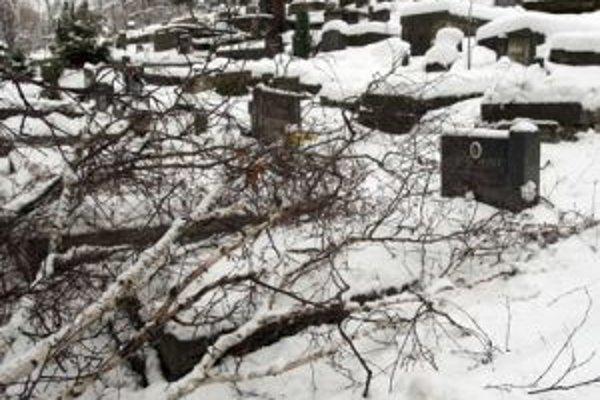Ťažký sneh lámal pred niekoľkými dňami stromy a na viacerých miestach stredného Slovenska narobil problémy v mestách, či na cintorínoch, lesné porasty však výraznejšie nepoškodil