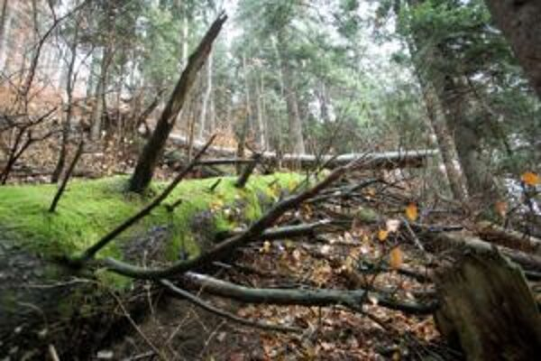 Prales Jelenec sa podarilo uchovať v takmer nezmenenom stave vďaka tomu, že sa nachádza v neschodnom teréne