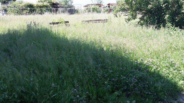 Na mnohých miestach v Prievidzi je nepokosená tráva.