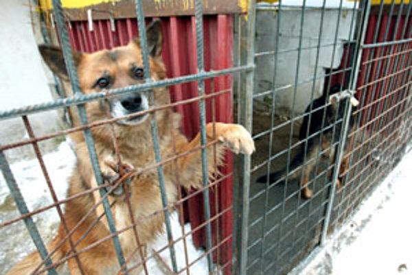 Zvieratá v karanténnej stanici vo Zvolene.