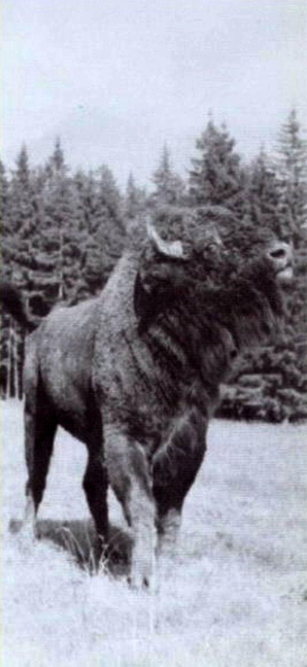 Bol to obrovský a majestátny tvor.