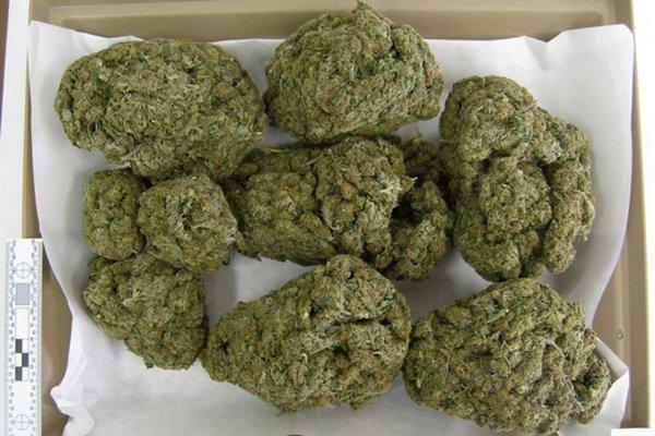 Zadržaná marihuana. Róbert jej doviezol takmer 700 gramov.