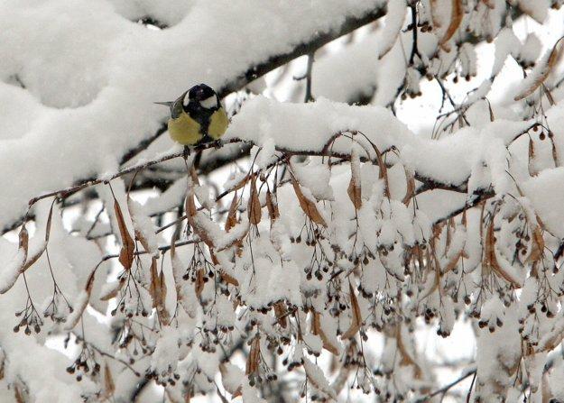 Prikrmovanie vtákov bude v najbližších dňoch veľmi aktuálne.