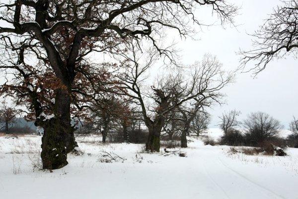 Gavurky s košatými solitérnymi dubmi ležia na ploche veľkej 68 hektárov.