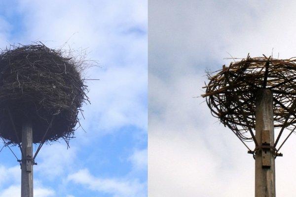 Zrekonštruované hniezdo.
