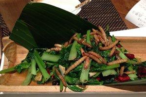 Múčne červy (Tenebrio moritor) sú najčastejšie konzumovaným hmyzom.