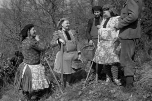 Na archívnej snímke z 9. apríla 1962 mesiac lesov na Modrom Kameni začali zalesňovaním. V južných oblastiach Stredoslovenského kraja, ktorý je najlesnatejším v našej republike, sa začal tohtoročný Mesiac lesov nástupom lesníkov na zalesňovacie práce. Prvé sadeničky dali do pôdy v polesiach lesných závodov Lučenec, Modrý Kameň, Šafárikovo a v ďalších. V celom kraji plánujú tohto roku zalesniť viac ako 18 tisíc hektárov lesnej i nelesnej pôdy. Zábery sú z Lesného závodu Modrý kameň.