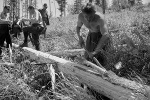 1965, Pracovníci tohto závodu za pomoci brigádnikov spracovali doteraz takmer 90 tisíc kubíkov dreva.