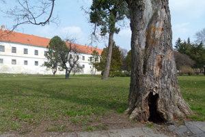 Obnovou má prejsť aj parková zeleň.