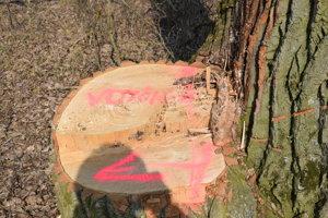 Na tomto kmeni je vyznačená šipka smerom na vojčický kataster, odkiaľ už nebol súhlas na výrub drevín.