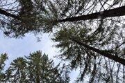 Stromy, ktoré sile vetra odolali.