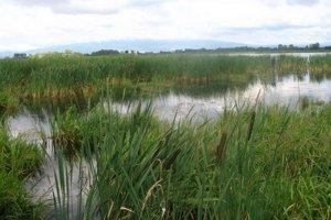 Senianske rybníky. Lokalita je medzinárodnou križovatkou počas jarného a jesenného migračného ťahu vtákov.