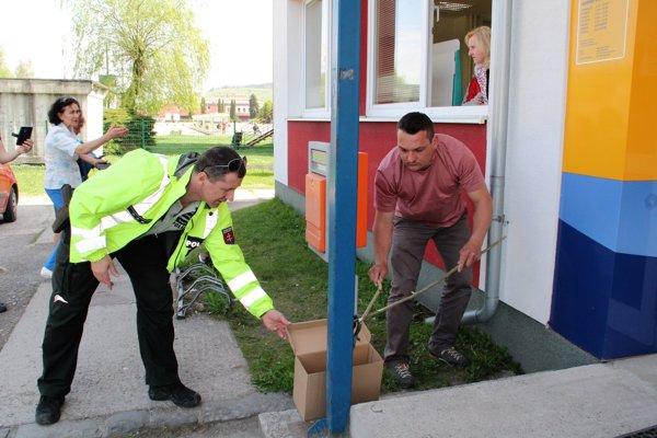 Pred vchodom na poštu chytali hada.