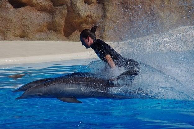 Delfínia show je o zábave a schopnosti zvierat spolupracovať s človekom.