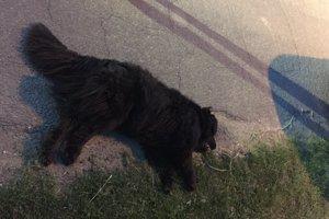 Utýraný pes v Bátorových Kostihoch