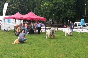 Medzinárodná výstava psov všetkých plemien