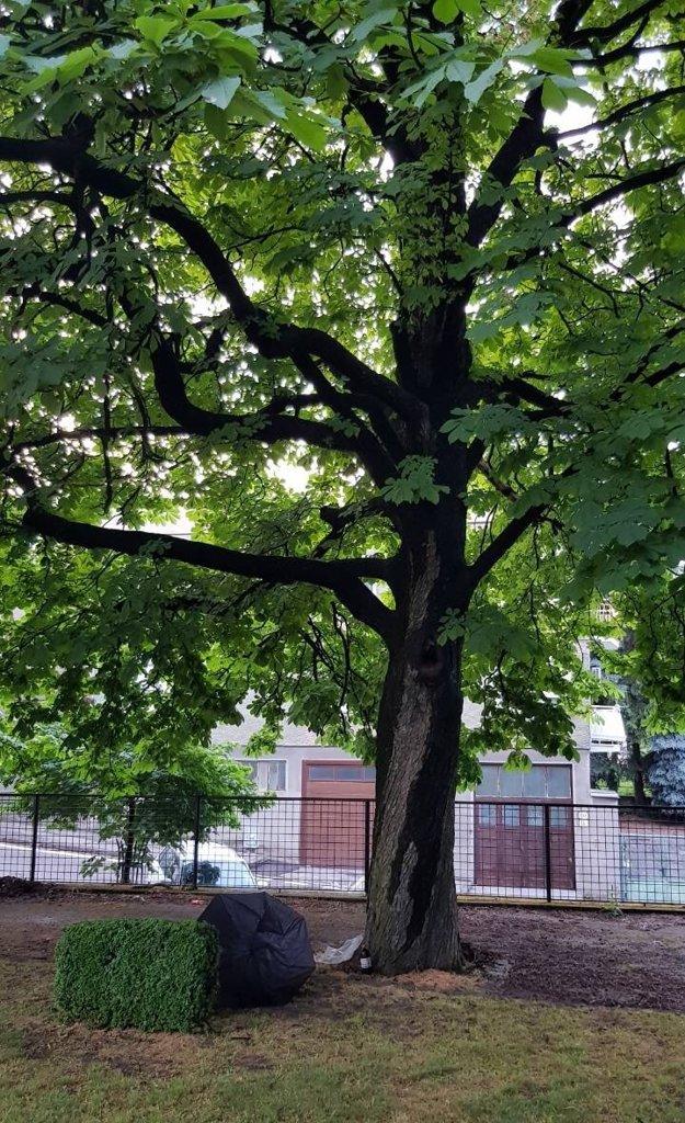 Strom, pod ktorým stál muž.