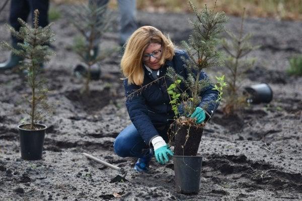 Sadenie stromčekov pri príležitosti výsadby nových vianočných stromčekov pre nemocnice v lesnej škôlke v Šajdíkových Humenciach.