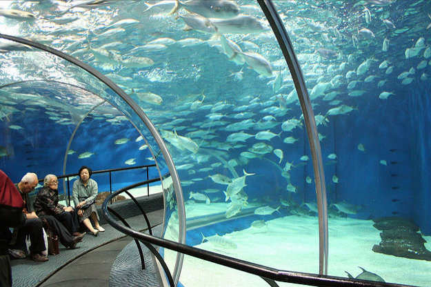 Podvodný sklený tunel v Šanghaji meria 155 metrov a je najdlhší na svete.