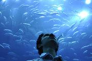 V najväčších akváriách na svete je človek obklopený miliónmi litrov vody.