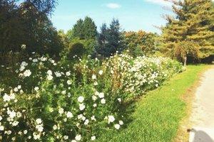 Botanická záhrada SPU v Nitre.