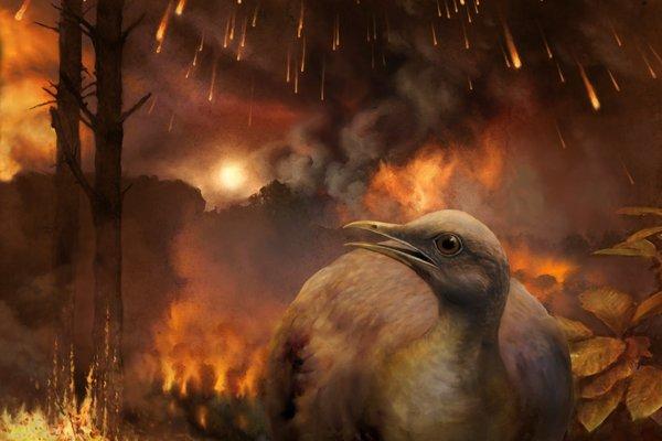 Asteroid, ktorý eliminoval nevtáčie dinosaury, zničil svetové lesy. Na ilustrácii je hypotetický jedinec druhu, ktorý katastrofu prežil. Bol malý a stvorený pre život na zemi.