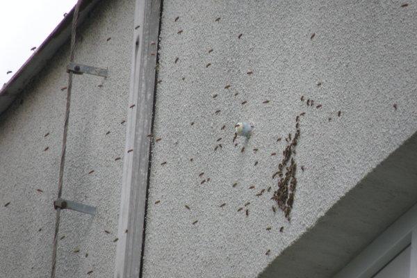 Roj sa usadil na budove školy.