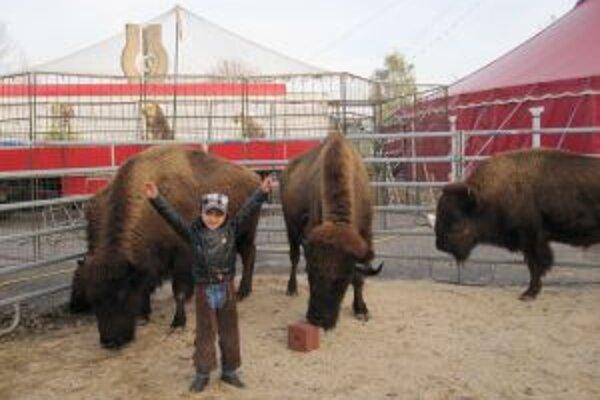 Žilinčani sa môžu tešiť na drezúru bizónov.
