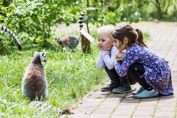 S lemurmi v bezprostrednej blízkosti.