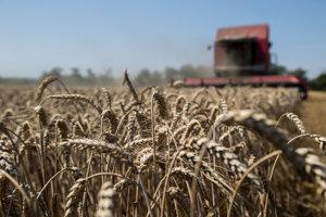 Tradične sa pšenici najviac darilo na Žitnom ostrove.