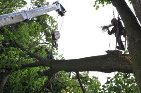 Zlomená lipa ostala zaseknutá v korune susedného stromu.