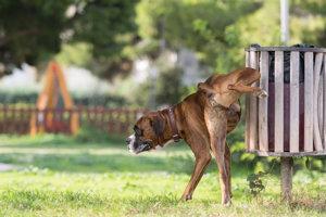 Túlajúce sa psy znečisťujú obec.