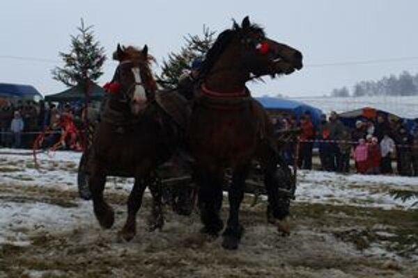 """Kone zapriahnuté za vozom museli slalomom prebehnúť pomedzi stromy. Ich majitelia mali čo robiť, aby zvieratá """"ukočírovali""""."""