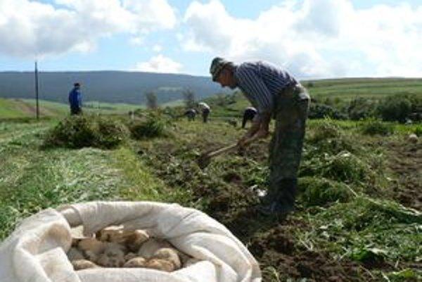 Pekné počasie týchto dní umožnilo ľuďom pozbierať z polí zemiaky.