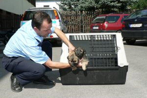 Týchto dvoch psíkov našiel istý muž túlať sa po Osádke. Uľútostilo sa mu ich a tak ich zaniesol na policajnú stanicu.
