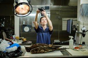 Veterinárna patologička Rebecca Kaganová skúma orla skalného, u ktorého predpokladali, že ho zabilo elektrické vedenie.