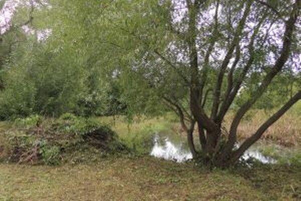 Okolo jazierka vznikne oáza pre relax sídlišťanov.
