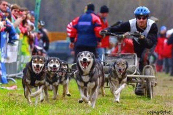 Maroš Litvaj si so svojimi psami vybojoval zlato.